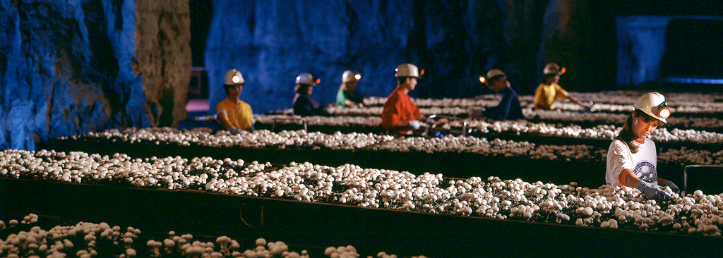 Commercial Photography of Pittsburgh mushroom mine workers